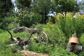 http://gardenpanorama.cz/wp-content/uploads/IMG_8737-170x115.jpg