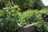 http://gardenpanorama.cz/wp-content/uploads/IMG_8739-170x115.jpg
