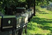 http://gardenpanorama.cz/wp-content/uploads/IMG_9170-170x115.jpg