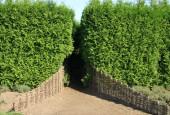 http://gardenpanorama.cz/wp-content/uploads/IMG_9180-170x115.jpg
