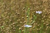 http://gardenpanorama.cz/wp-content/uploads/IMG_9184-170x115.jpg