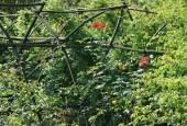 http://gardenpanorama.cz/wp-content/uploads/IMG_9201-170x115.jpg