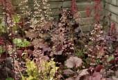 http://gardenpanorama.cz/wp-content/uploads/MG_1951-170x115.jpg