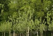 http://gardenpanorama.cz/wp-content/uploads/MG_1985-170x115.jpg