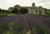 http://gardenpanorama.cz/wp-content/uploads/Saint_Paul_de_Mausole_IMG_7291_009-170x115.jpg