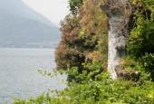 http://gardenpanorama.cz/wp-content/uploads/Villa_Cipressi_img_0239_001-170x115.jpg