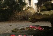 http://gardenpanorama.cz/wp-content/uploads/Zuschendorf_Kamelienschloss__mg_0655_001-170x115.jpg