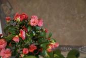 http://gardenpanorama.cz/wp-content/uploads/Zuschendorf_Kamelienschloss__mg_0663_004-170x115.jpg