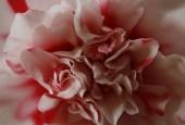 http://gardenpanorama.cz/wp-content/uploads/Zuschendorf_Kamelienschloss__mg_0705_008-170x115.jpg