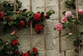 http://gardenpanorama.cz/wp-content/uploads/Zuschendorf_Kamelienschloss__mg_0727_011-170x115.jpg