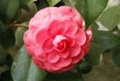 http://gardenpanorama.cz/wp-content/uploads/Zuschendorf_Kamelienschloss__mg_0738_013-170x115.jpg