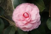 http://gardenpanorama.cz/wp-content/uploads/Zuschendorf_Kamelienschloss__mg_0739_014-170x115.jpg