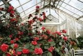 http://gardenpanorama.cz/wp-content/uploads/Zuschendorf_Kamelienschloss__mg_0744_015-170x115.jpg