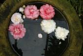http://gardenpanorama.cz/wp-content/uploads/Zuschendorf_Kamelienschloss__mg_0761_017-170x115.jpg