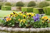 http://gardenpanorama.cz/wp-content/uploads/aveburyDSCF0055_008-170x115.jpg