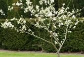 http://gardenpanorama.cz/wp-content/uploads/aveburyDSCF0061_014-170x115.jpg