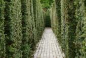 http://gardenpanorama.cz/wp-content/uploads/aveburyDSCF0077_027-170x115.jpg