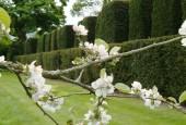 http://gardenpanorama.cz/wp-content/uploads/aveburyDSCF0078_028-170x115.jpg