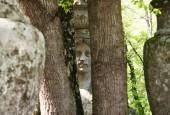 http://gardenpanorama.cz/wp-content/uploads/bomarzoimg_6615_017-170x115.jpg