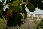 http://gardenpanorama.cz/wp-content/uploads/botanicka_rim_img_6926_01-170x115.jpg