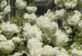 http://gardenpanorama.cz/wp-content/uploads/botanicka_rim_img_6958_04-170x115.jpg