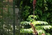 http://gardenpanorama.cz/wp-content/uploads/botanicka_rim_img_6960_08-170x115.jpg