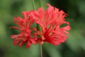 http://gardenpanorama.cz/wp-content/uploads/botanicka_zahrada_trojaimg_9299_005-170x115.jpg
