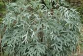 http://gardenpanorama.cz/wp-content/uploads/botanicka_zahrada_trojaimg_9307_007-170x115.jpg