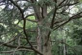 http://gardenpanorama.cz/wp-content/uploads/cicogna_img_0024_005-170x115.jpg
