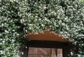 http://gardenpanorama.cz/wp-content/uploads/cicogna_img_0064_019-170x115.jpg