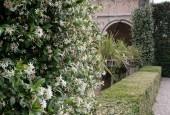 http://gardenpanorama.cz/wp-content/uploads/cicogna_img_0065_020-170x115.jpg