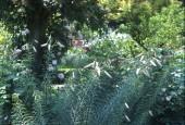 http://gardenpanorama.cz/wp-content/uploads/florencie_boboli_sken227_004-e1441038511594-170x115.jpg