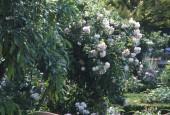 http://gardenpanorama.cz/wp-content/uploads/florencie_boboli_sken235_006-e1441038451990-170x115.jpg