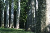 http://gardenpanorama.cz/wp-content/uploads/florencie_boboli_sken243_008-e1441038403520-170x115.jpg