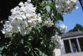 http://gardenpanorama.cz/wp-content/uploads/florencie_boboli_sken286_016-e1441038196354-170x115.jpg