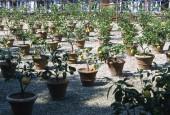 http://gardenpanorama.cz/wp-content/uploads/florencie_boboli_sken294_019-e1441038109765-170x115.jpg