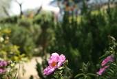 http://gardenpanorama.cz/wp-content/uploads/giardino_tarocchi_img_7143_021-170x115.jpg