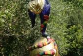 http://gardenpanorama.cz/wp-content/uploads/giardino_tarocchi_img_7159_032-170x115.jpg