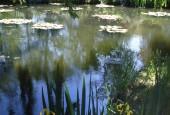 http://gardenpanorama.cz/wp-content/uploads/giverny_07-170x115.jpg
