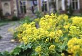 http://gardenpanorama.cz/wp-content/uploads/heale_sken223_006-170x115.jpg