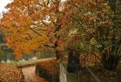 http://gardenpanorama.cz/wp-content/uploads/img_2472-170x115.jpg
