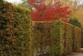 http://gardenpanorama.cz/wp-content/uploads/img_2525-170x115.jpg