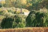 http://gardenpanorama.cz/wp-content/uploads/img_65231-170x115.jpg