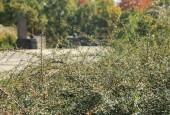 http://gardenpanorama.cz/wp-content/uploads/img_6531-170x115.jpg