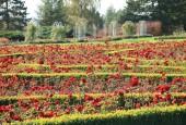 http://gardenpanorama.cz/wp-content/uploads/img_65341-170x115.jpg