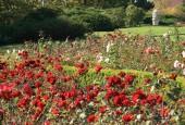http://gardenpanorama.cz/wp-content/uploads/img_65451-170x115.jpg