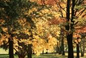 http://gardenpanorama.cz/wp-content/uploads/img_65471-170x115.jpg