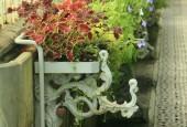 http://gardenpanorama.cz/wp-content/uploads/img_7769-170x115.jpg