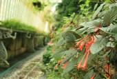 http://gardenpanorama.cz/wp-content/uploads/img_7785-170x115.jpg