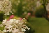 http://gardenpanorama.cz/wp-content/uploads/img_8381-170x115.jpg